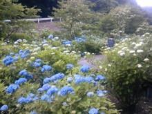 冨山社長の『Re-COCORO』ブログ-100620_154624.jpg