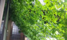 茨城県3代続く感激塗り替え専門店-20120814_131723.jpg